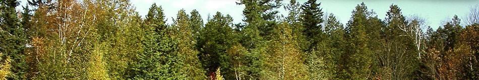 banner-sluzby-bg.jpg