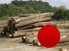 Listnaté tvrdé palivové drevo (buk, hrab, dub) voľnoložené v dĺžkach 2 – 4 m
