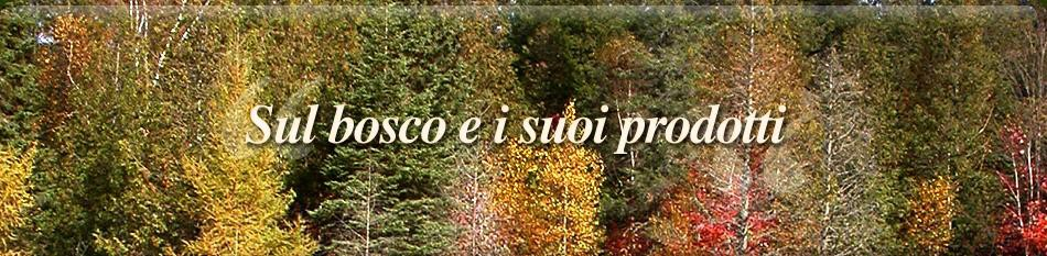 banner-index-5-ita.jpg