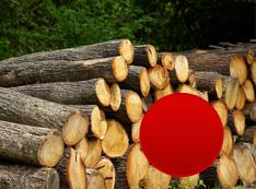 Listnaté tvrdé palivové drevo (dub) v dĺžke 1m